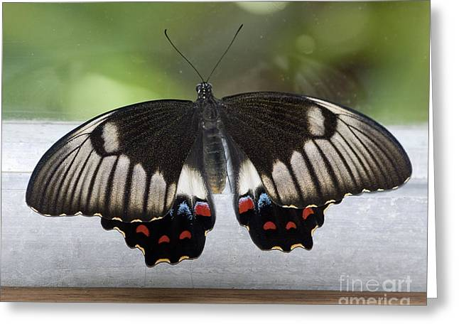 Butterfly Greeting Card by Steven Ralser
