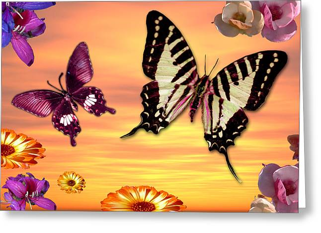 Butterfly Sunset Greeting Card by Alixandra Mullins