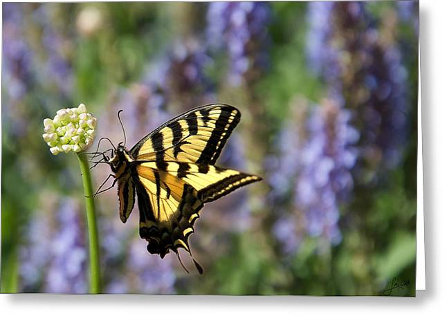 Butterfly Thoughts Greeting Card by Lisa Knechtel