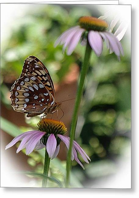 Butterfly Time Greeting Card by Karen McKenzie McAdoo