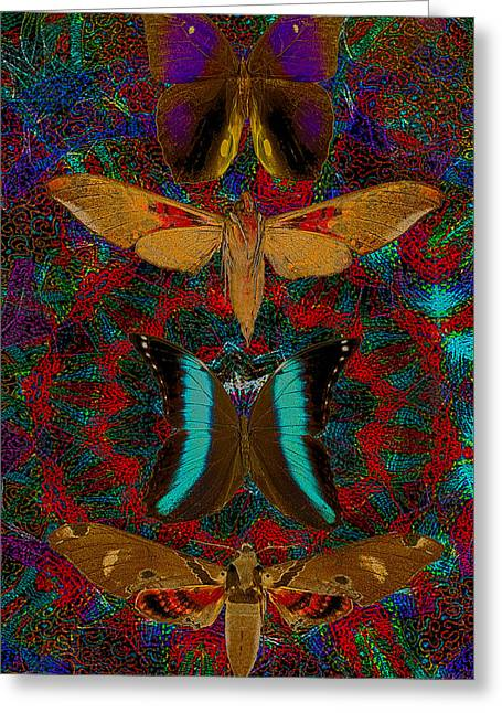 Solar Butterfly Greeting Card