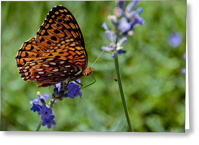 Butterfly Visit Greeting Card