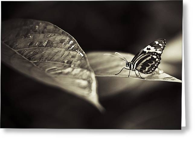 Butterfly Warm Tone Greeting Card