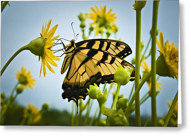Butterfly Greeting Card by Williams-Cairns Photography LLC