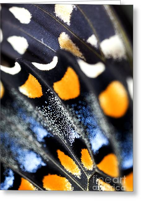 Butterfly Wings Greeting Card by Iris Richardson