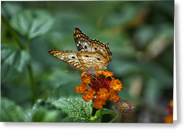 Greeting Card featuring the photograph Butterfly Wings Of Sun Light by Thomas Woolworth