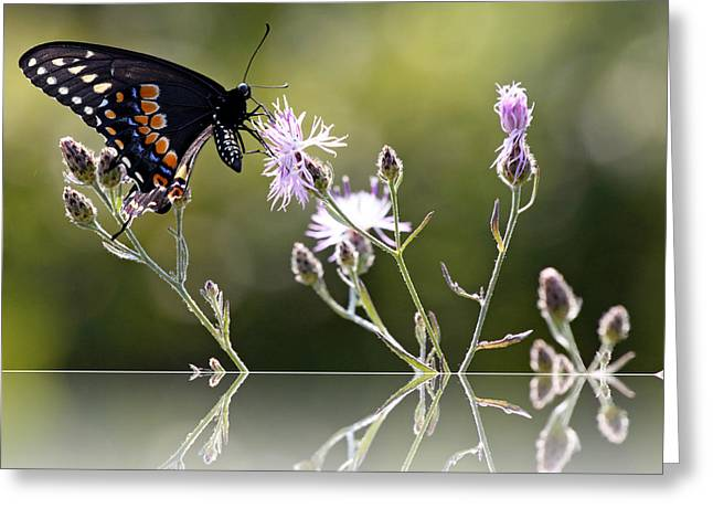 Greeting Card featuring the photograph Butterfly With Reflection by Eleanor Abramson