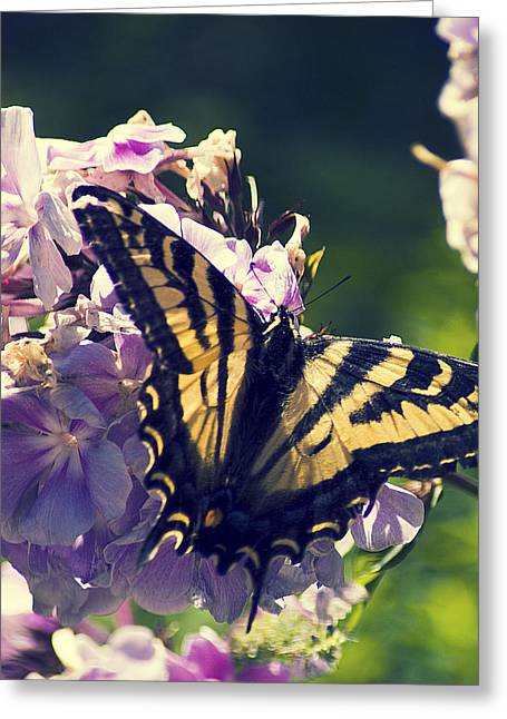 Greeting Card featuring the photograph Butterfly by Yulia Kazansky