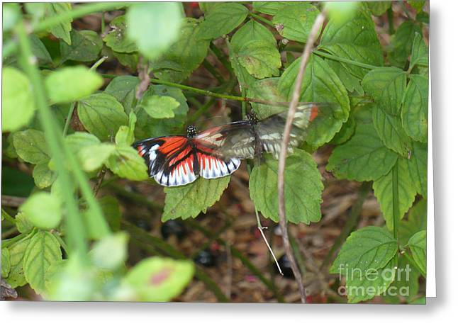 Butterfly1 Greeting Card by Kryztina Spence