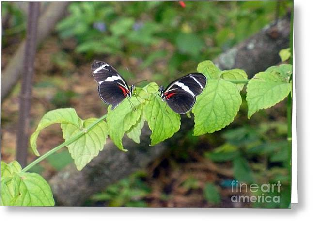 Butterfly2 Greeting Card by Kryztina Spence