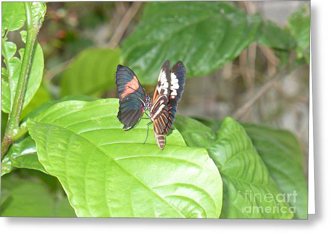 Butterfly4 Greeting Card by Kryztina Spence