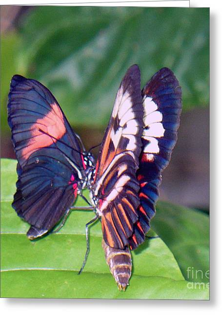 Butterfly6 Greeting Card by Kryztina Spence