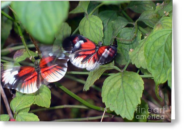 Butterfly7 Greeting Card by Kryztina Spence