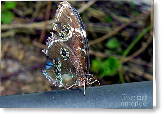 Butterfly8 Greeting Card by Kryztina Spence