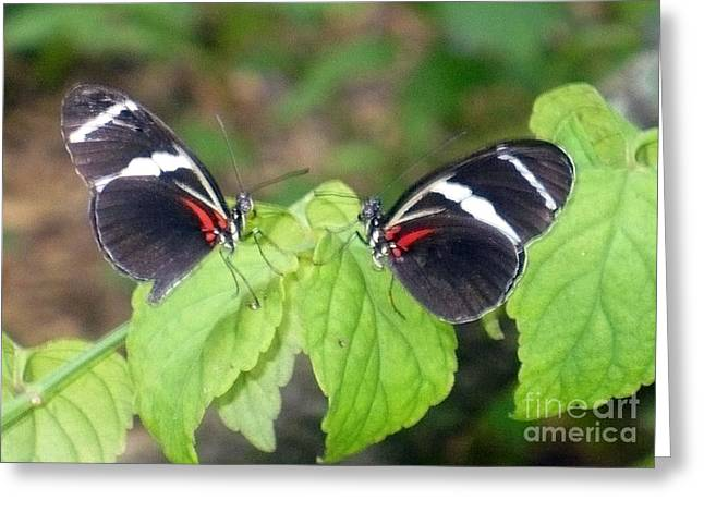 Butterfly9 Greeting Card by Kryztina Spence