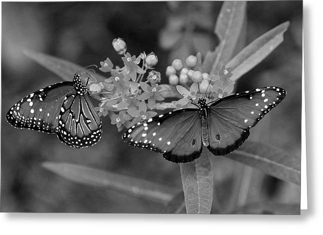 Greeting Card featuring the photograph Butterflys by Joseph G Holland