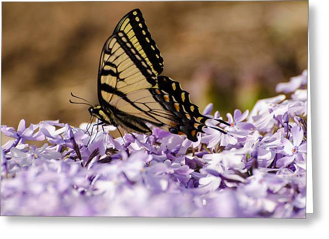 Butterfy On Flowers Greeting Card
