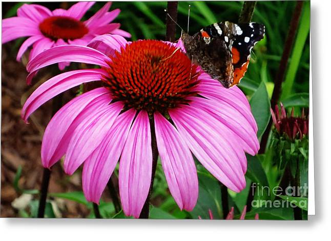 Butterly On Flower Greeting Card by Claudette Bujold-Poirier