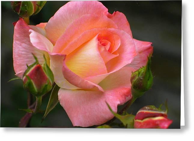 Buttermilk Pink Greeting Card by Derek Dean