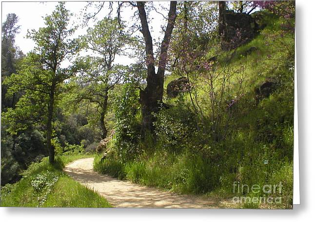 Buttermilk Trail South Yuba Greeting Card