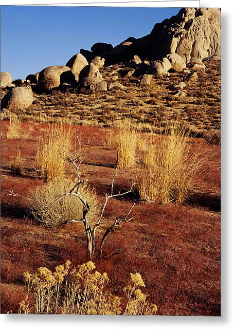 Buttermilks - Red Brush Greeting Card