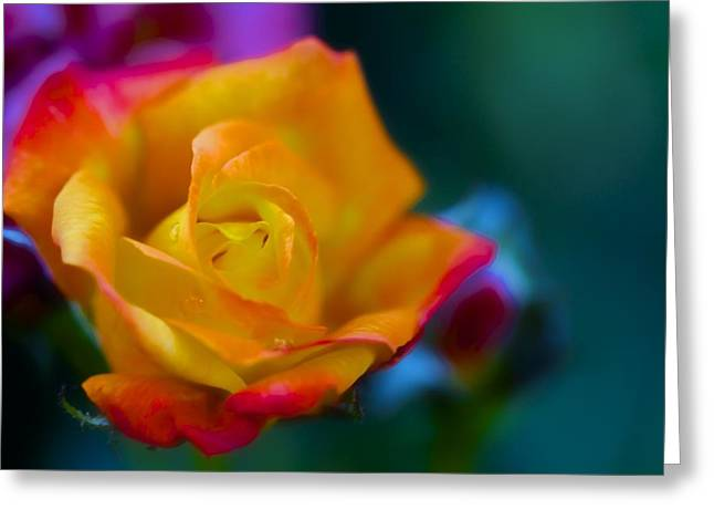 Butterscotch Rose Greeting Card