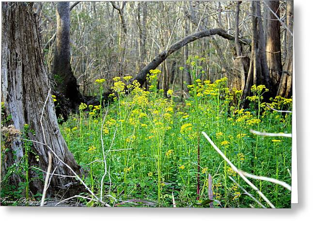 Butterweed Florida Wildflower Greeting Card by Debra Forand