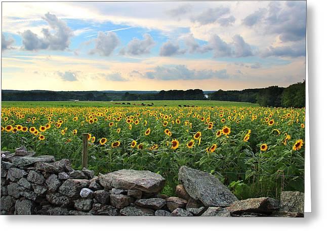 Buttonwood Farm Sunflowers Greeting Card