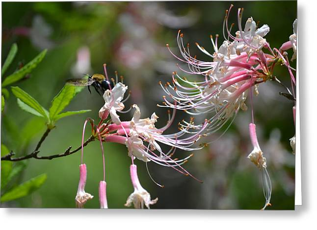 Greeting Card featuring the photograph Buzz Buzz by Tara Potts