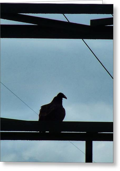 Buzzard On Tower Greeting Card by Mark Malitz