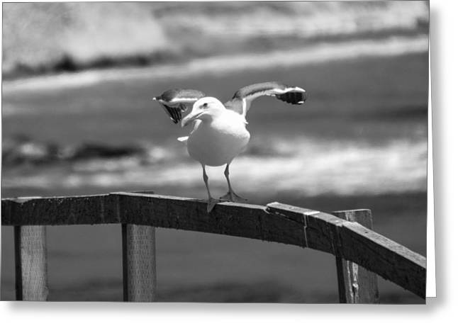 Bw Pismo Beach Seagull On The Fence Greeting Card by Barbara Snyder