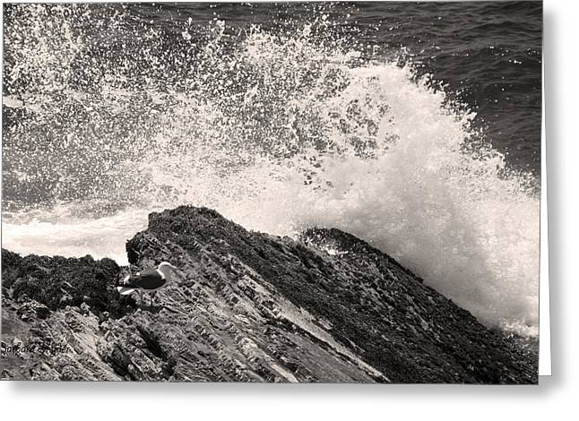 Bw Seagull Sea Spray Pismo Beach Greeting Card by Barbara Snyder