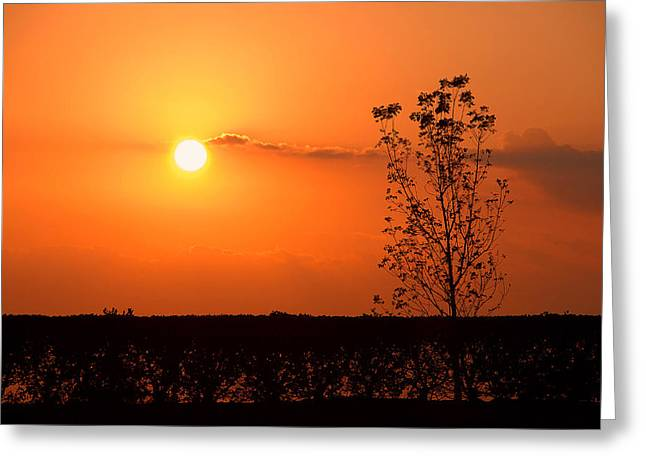 Greeting Card featuring the photograph By The Everglades by Lorenzo Cassina