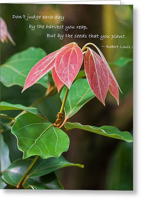 Greeting Card featuring the photograph By The Seeds That You Plant by Jordan Blackstone