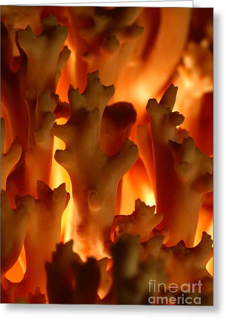 C Ribet Mushroom And Fungi Art From The Flames Greeting Card by C Ribet