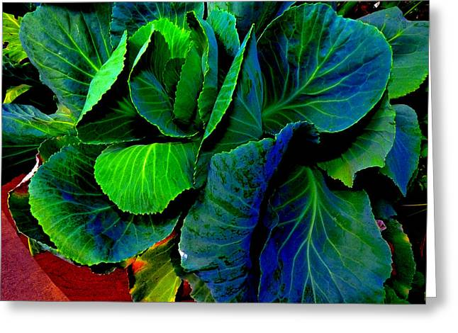 Cabbage Gone Wild Greeting Card