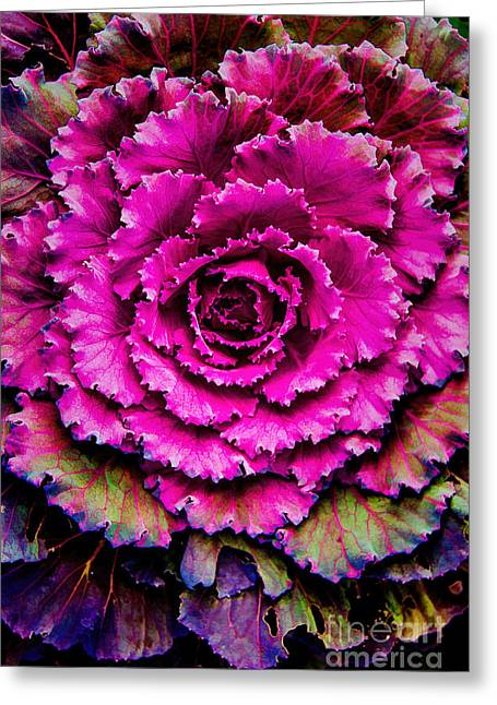 Cabbage Greeting Card by Jon Burch Photography