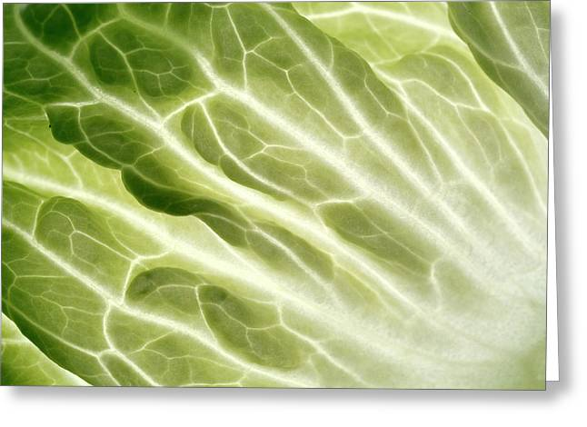 Cabbage Leaf Veins Greeting Card by Uk Crown Copyright Courtesy Of Fera/science Photo Library