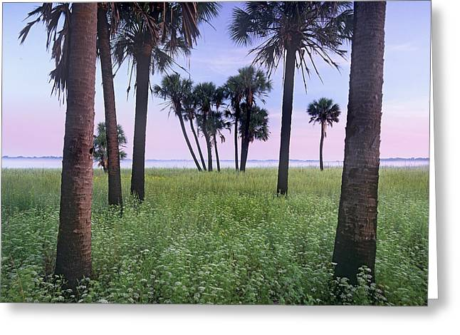 Cabbage Palm Meadow Florida Greeting Card by Tim Fitzharris