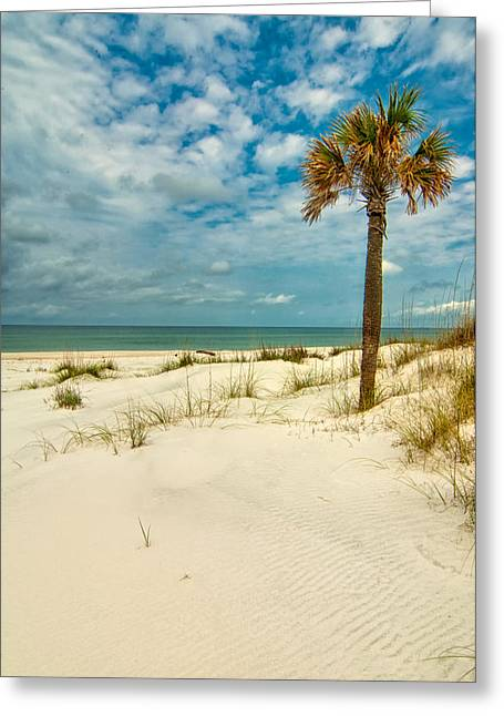 Cabbage Palm On St. Joseph Peninsula Greeting Card by Rich Leighton