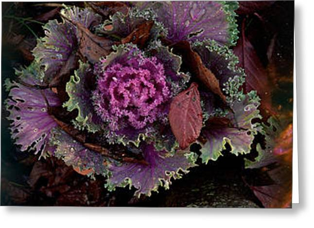 Cabbage With Butterfly Nebula Greeting Card by Panoramic Images