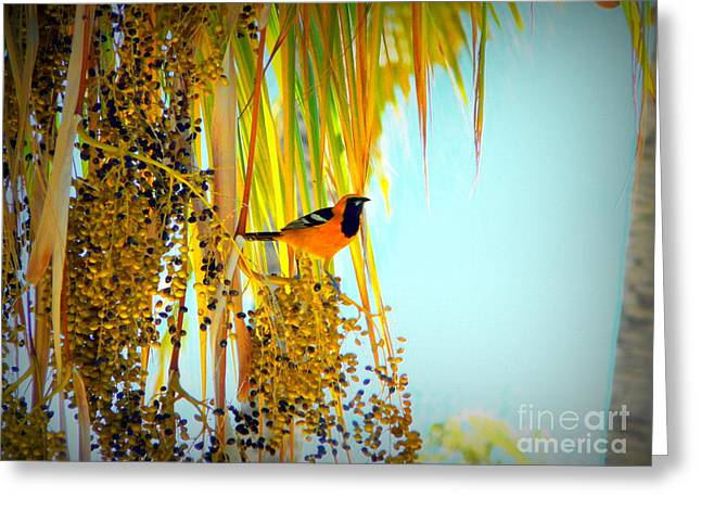 Cabo Oriole Greeting Card