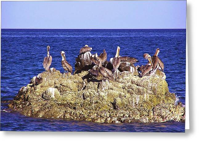 Cabo Pelicans Greeting Card