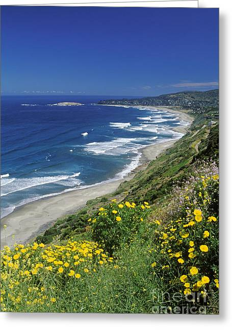 Cachagua Coastline Chile Greeting Card