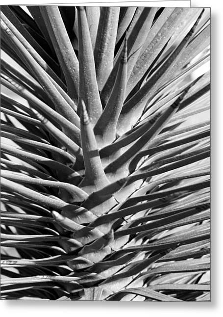 Cactus 1 Greeting Card