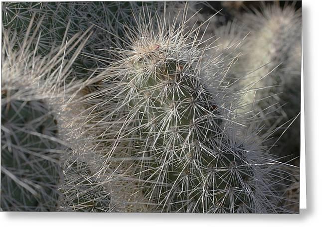 Cactus 12 Greeting Card