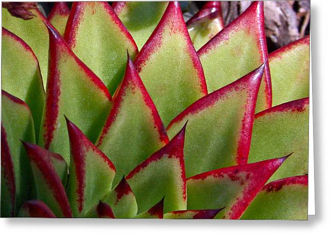 Cactus 3 Greeting Card