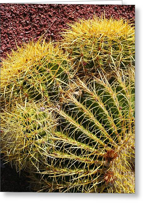 Cactus 9 Greeting Card