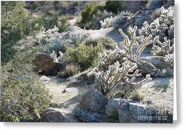 Cactus And Rocks Greeting Card by Deborah Smolinske