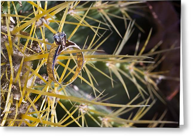 Cactus And Wedding Ring 3 Greeting Card by Douglas Barnett